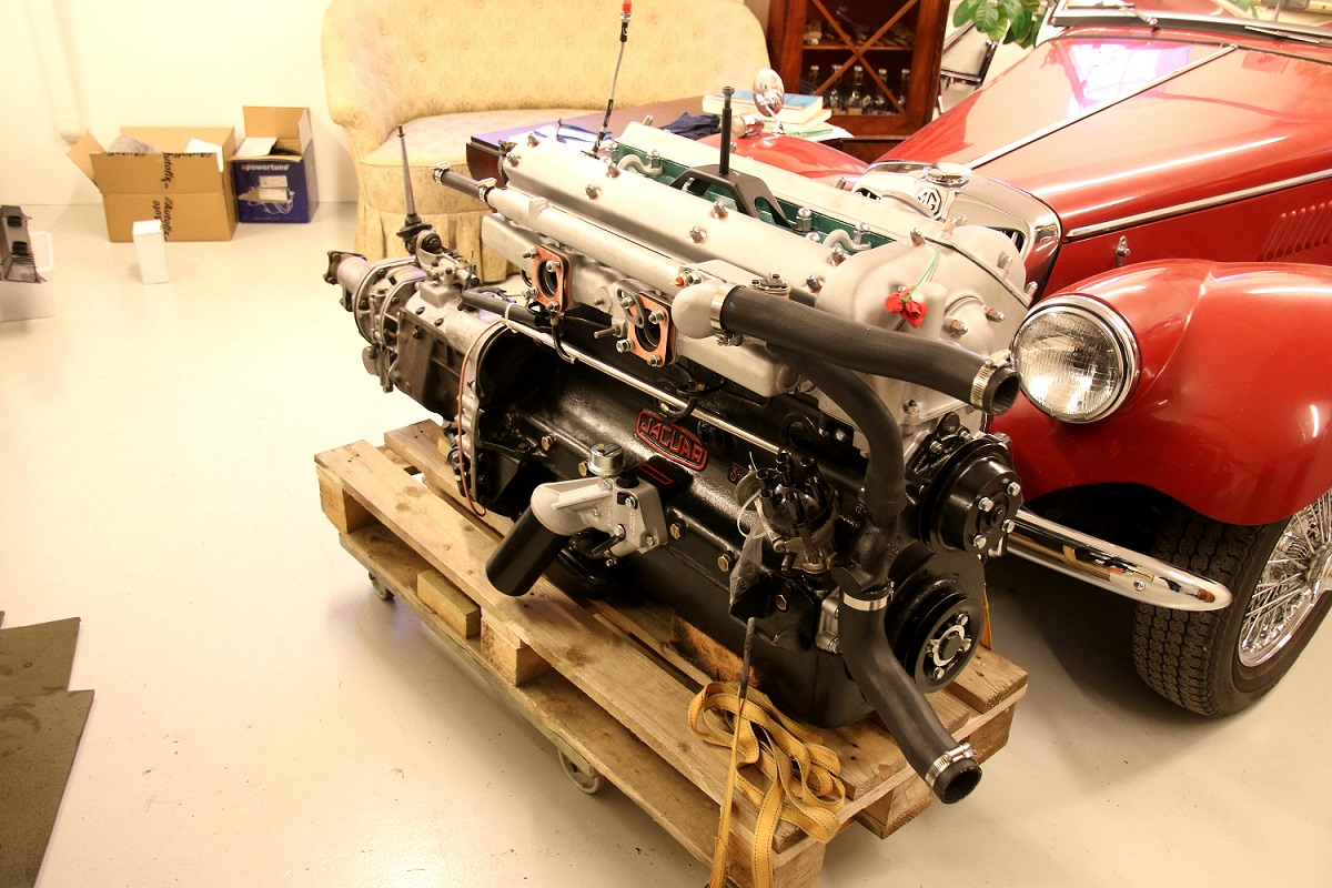 Jaguar 13